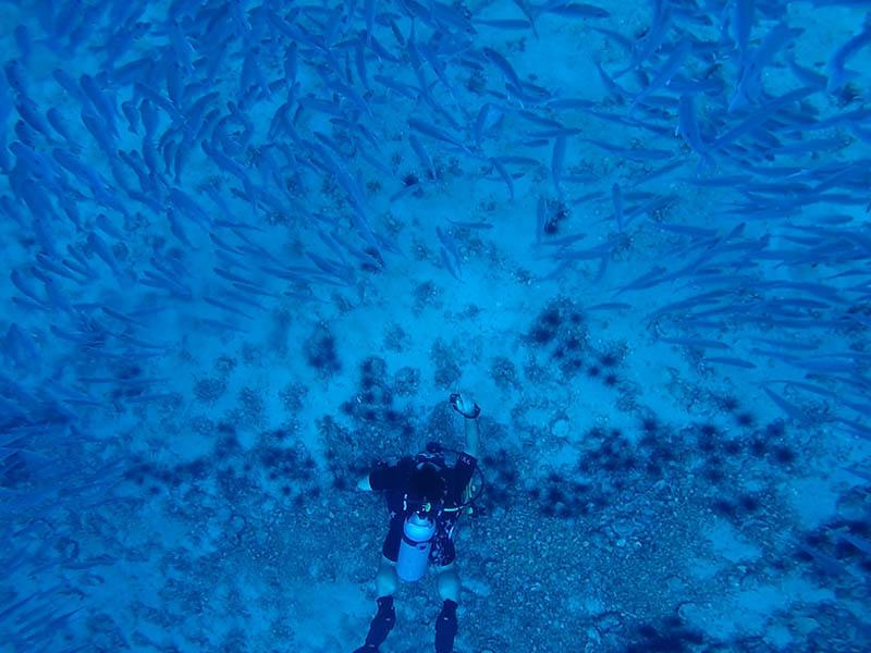 diving-_0001_Walter 1